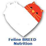 Cat Feline Breed Nutrition
