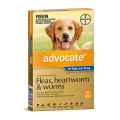 advocate dog extra large blue