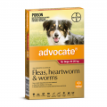 advocate dog large red