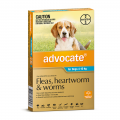 advocate dog medium aqua
