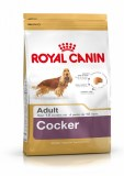 Royal Cocker Spaniel Adult